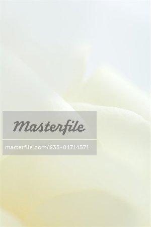 Blanc rose, extrême en gros plan