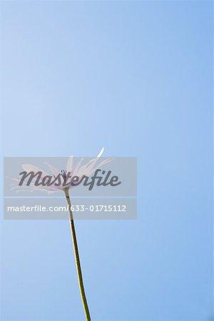 Flower, sky in background