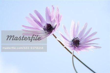 Fleurs, ciel en arrière-plan