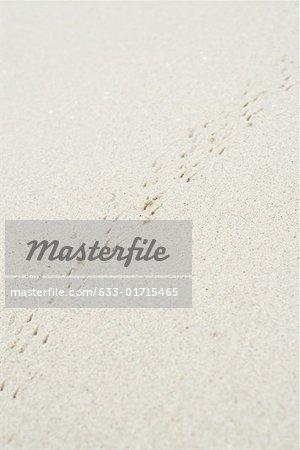 Suivre sur sable, plein cadre