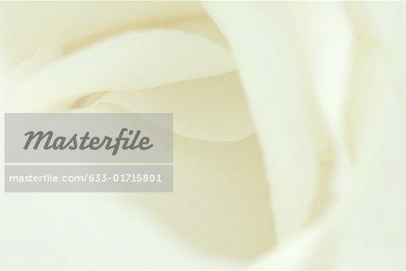 Pétales de fleurs blanches, très gros plan