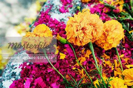 Nahaufnahme, Blumen und Holz-Späne gefärbt, am Grab, San Miguel de Allende, Mexiko