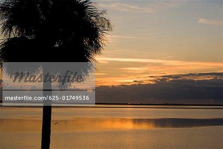 Silhouette of a palm tree, St. Augustine Beach, Florida, USA