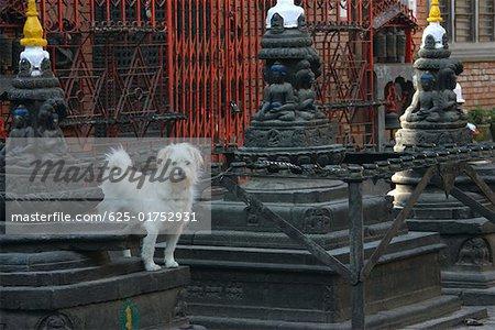 Dog standing outside a temple, Swayambhunath, Kathmandu, Nepal