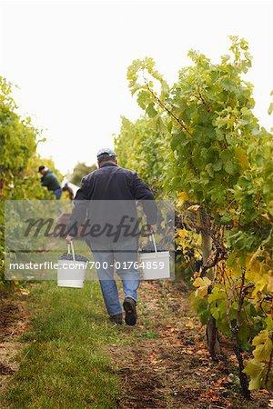 Agriculteurs dans vignoble