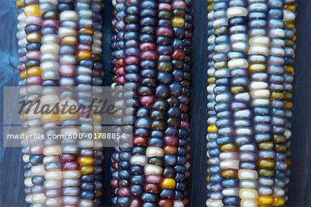 Getrockneten Mais
