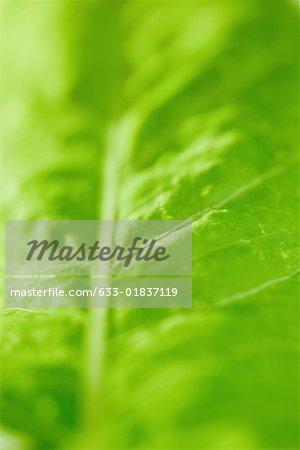 Green leaf, extreme close-up, full frame