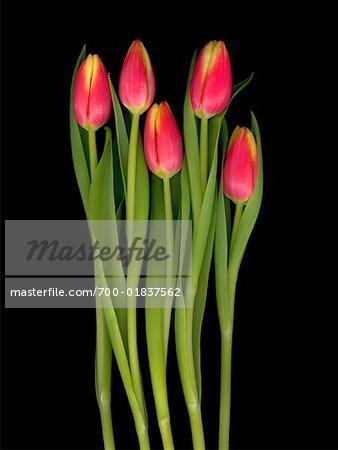 Stillleben mit Tulpen