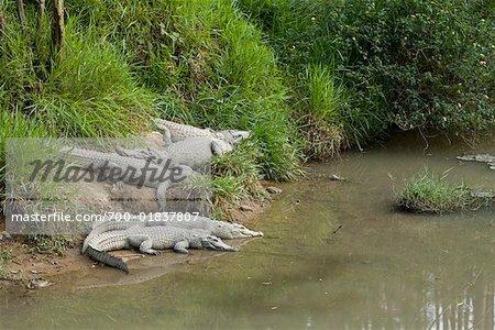 Crocodiles, Da Lat, Vietnam