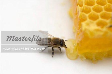 Abeille à côté de nid d'abeilles (gros plan)