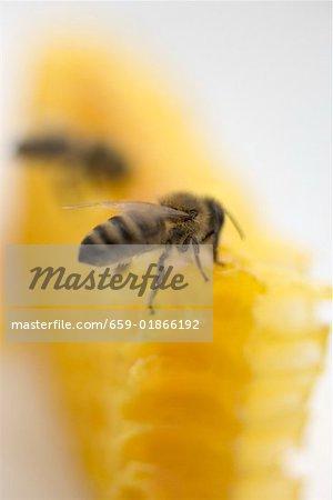 Deux abeilles sur nid d'abeille (gros plan)
