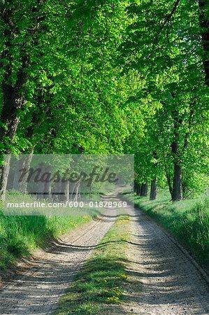 Chemin à travers la forêt, Mecklembourg-Poméranie occidentale, Allemagne
