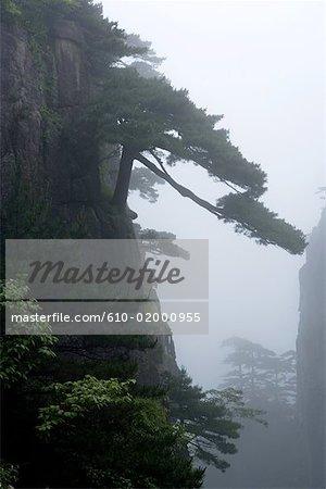 Montagnes de Huangshan Anhui, Chine