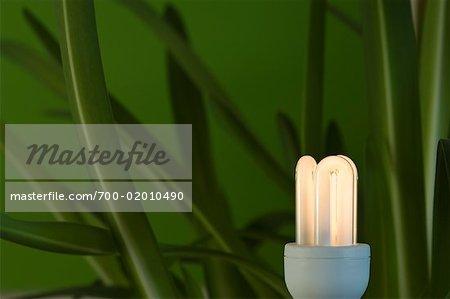 Plante et énergie ampoule efficace