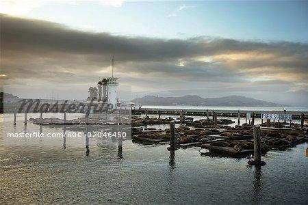 Lions de mer au Pier 39, San Francisco, California, Californie du Nord