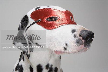 Maskierte dalmatinischen Hund