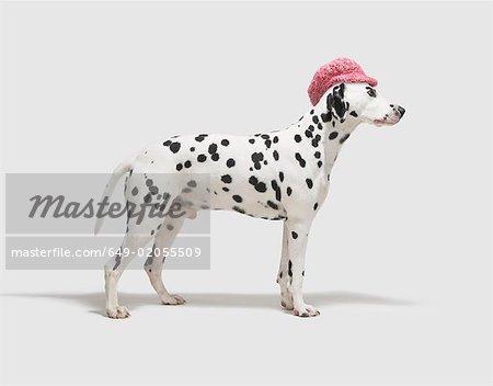 Hund trägt einen Hut