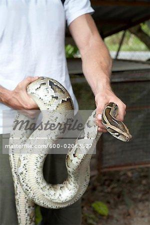 Snake, Mekong Delta, Vietnam