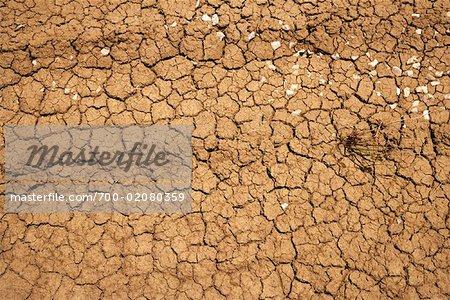 Cracked Earth, Kralendijk, Bonaire, Netherlands Antilles