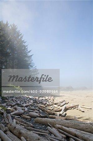 Treibholz am Strand, Long Beach, Pacific Rim Nationalpark, Vancouver ISland, British Columbia, Kanada