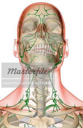 lymphknoten gesicht
