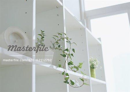 Plante en pot et réveil sur étagère