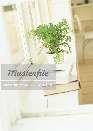 Fougères en pot de Maidehair de fenêtre