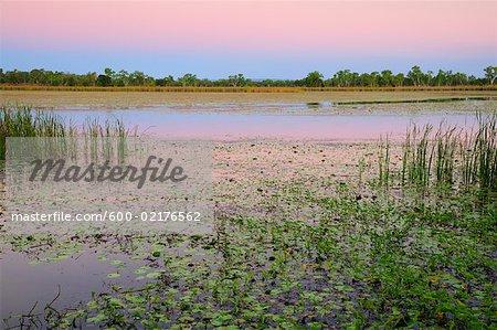 Lac Kununurra, Kimberley, Australie occidentale, Australie