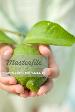 Mains de l'enfant tenant une chaux fraîche avec des feuilles