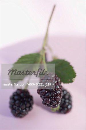 Blackberries on stalk with leaves