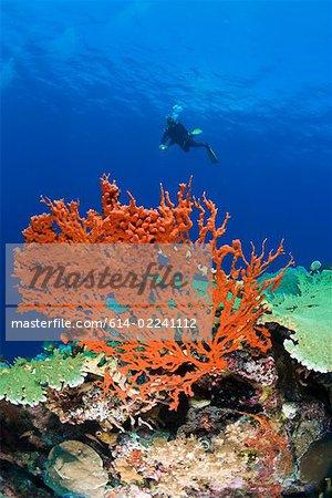 Plongeur dans le récif corallien