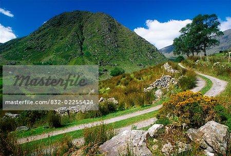 Broaghabinnia Berg, Black Valley, Killarney Nationalpark, County Kerry, Irland; Boreen im park