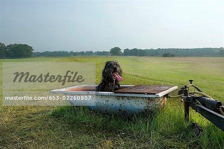 Ein Hund sitzt in einer Wanne in einem Feld