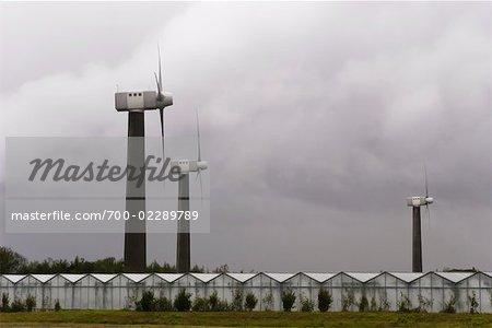Wind Turbines and Greenhouses, Vordingborg, Denmark