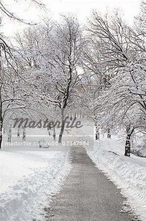 Voie dégagée dans le parc, Toronto, Ontario, Canada