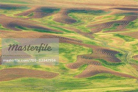 Antenne de champs, Palouse, comté de Whitman, Washington State, USA