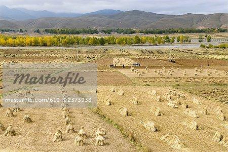 Paysages du Nord de la Chine, Gansu, champs après la récolte
