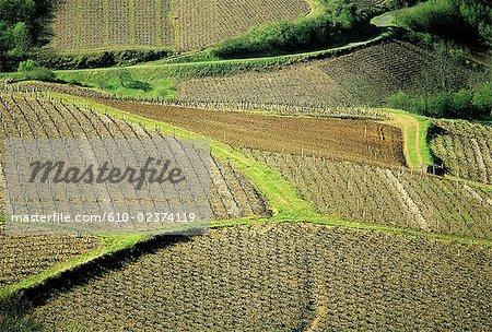 France, Beaujolais region, near Oingt, vines