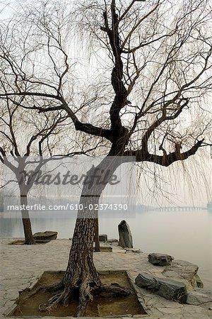 """China, Beijing, Summer Palace """"Yiheyan"""", trees and Kunming lake"""
