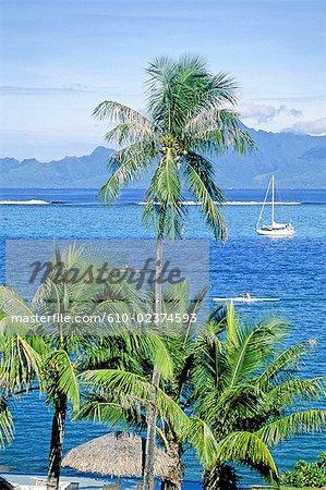 Polynésie française, île de Tahiti.