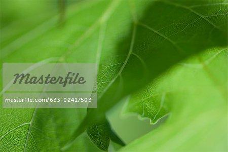 Green foliage, extreme close-up