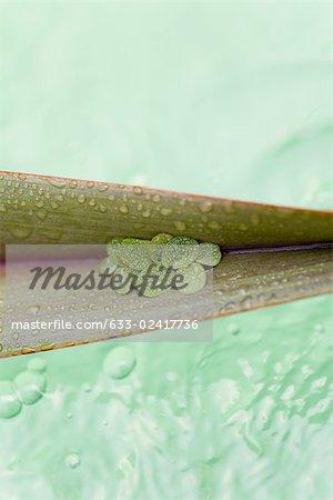 Feuilles sur feuilles de palmier, flottant sur l'eau