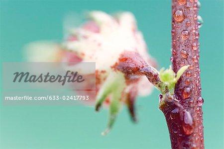 Fleur de fleurs tropicales exotiques sur tige rouge, gros plan