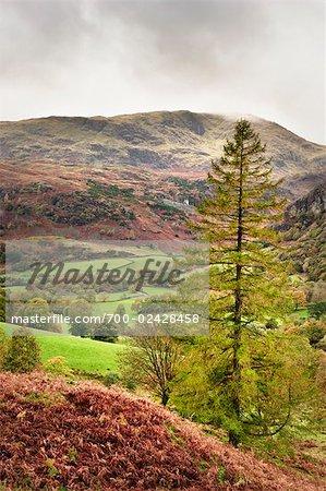 Autumn, Furness Fells, Lake District, Cumbria, England
