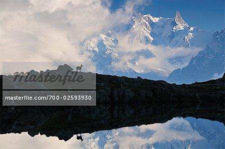 Alpine Ibex et Dent du Geant, Lacs de Cheserys, Chamonix, France