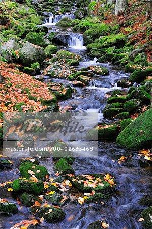 Kleine Ohe River, Bayerischer Wald, Bavaria, Germany