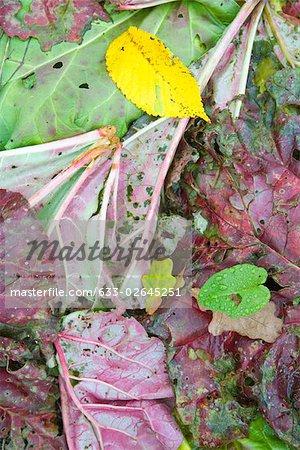 Variété de feuilles colorées