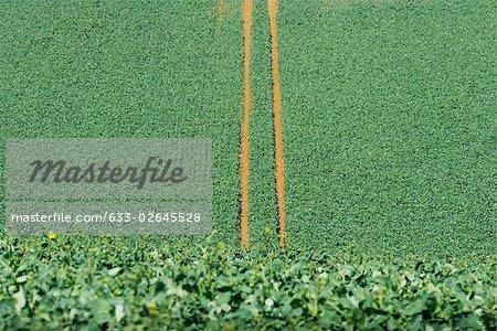 Chemins de roulement dans le champ cultivé, vue grand angle