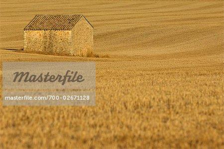 Bâtiment de pierre dans le champ de maïs, Provence, France