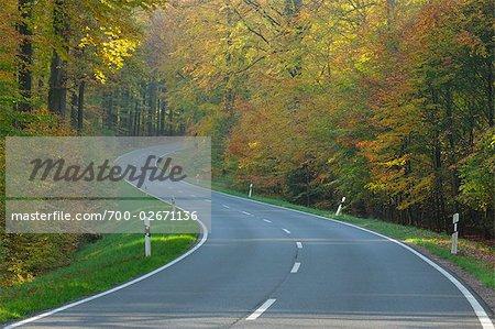 Road Through Beech Forest, Spessart, Bavaria, Germany
